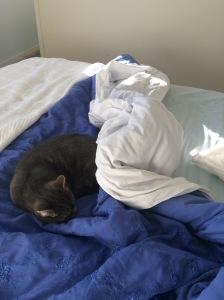 bone&silver cat