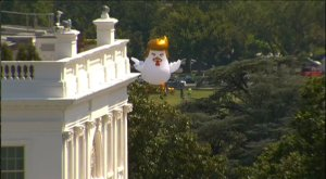 Artist Taran Singh Brar positioned this giant inflatable rooster behind the Whitehouse #TrumpChicken #art @boneAndsilver @realDonaldTrump