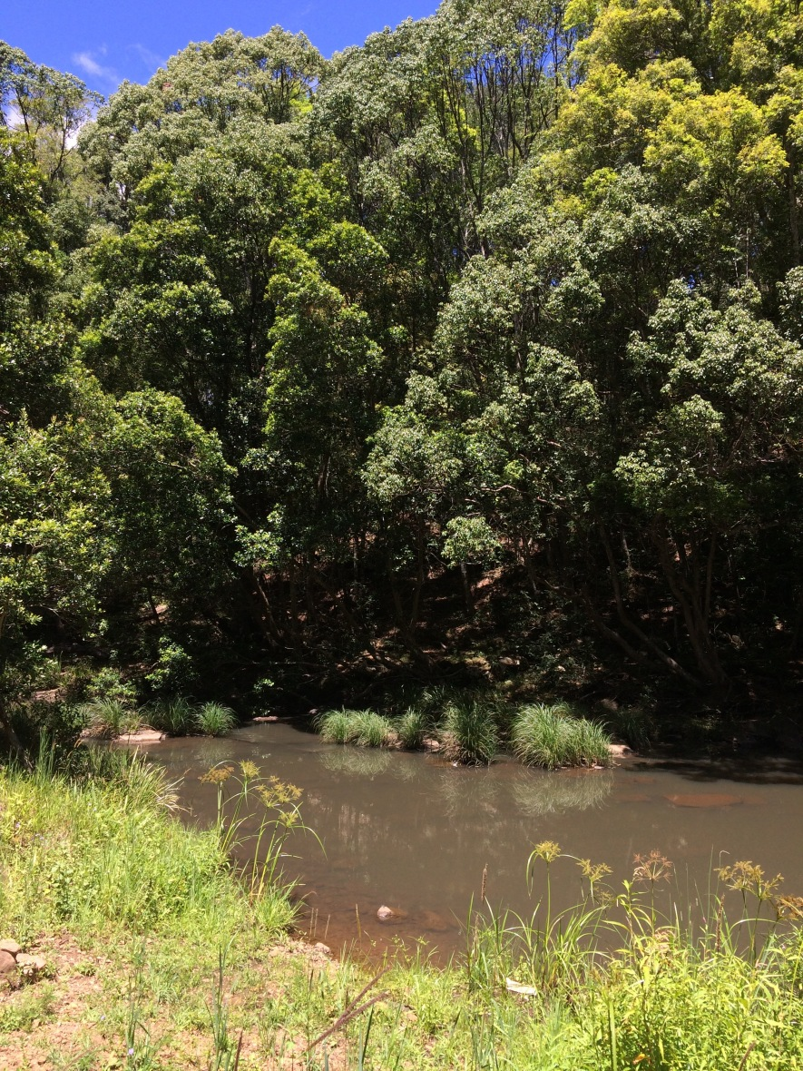 #Permaculture #ecovillage #Australia #over50blogger #wellbeing #nature #gratitude @boneAndsilver #native #creek