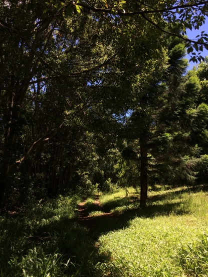 #Permaculture #ecovillage #Australia #over50blogger #wellbeing #nature #gratitude @boneAndsilver