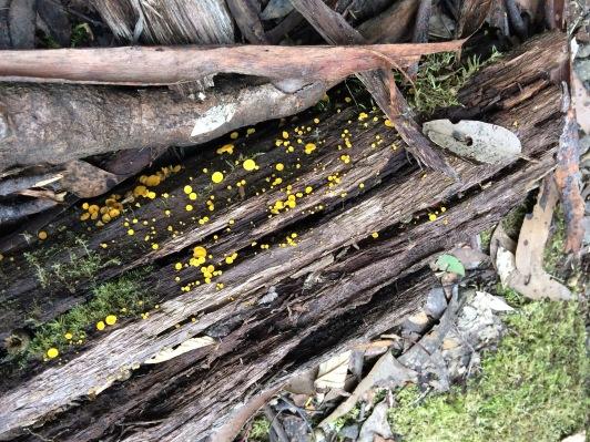 Rainforest gems #threecapestrack #tasmania #australia #nature #wildernesshike #over50
