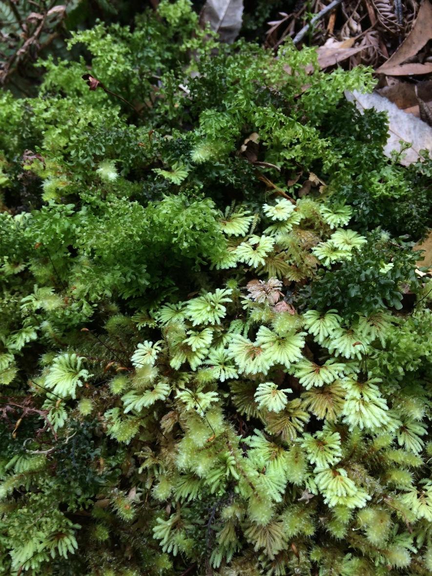 over 50 adventures with moss #rainforest #tasmania #australia #threecapestrack