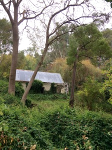 A cute derelict cottage on my early morning walk