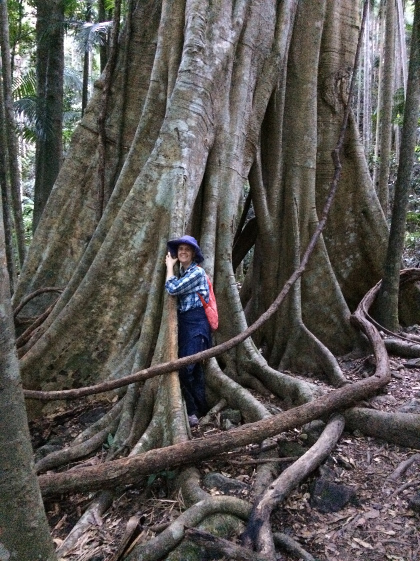 Massive tree in Australia to hike to for Mother's Day self care and wellbeing over 50