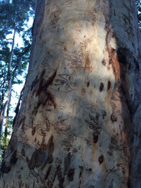 Waterfalls and scribbly gums in Australia to hike to for Mother's Day self care and wellbeing over 50