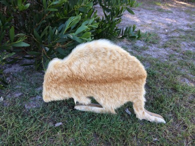 Native animal sculpture covered in feral cat fur #sculpture #Australia #art #creativity
