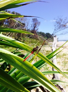 A dragonfly reminds me to be grateful for Nature