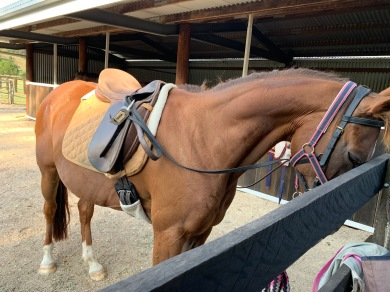 boneAndsilverBlog_horse2