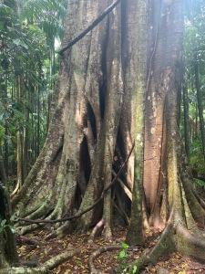 boneAndsilver_tree