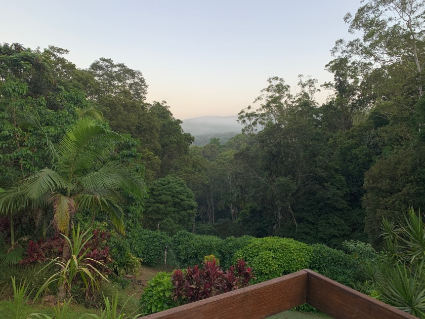 So grateful to be locking down here in the rainforest for COVID-19