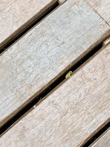 boneAndsilver_frog1