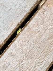 boneAndsilver_frog2