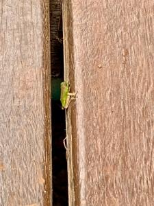 boneAndsilver_frog3